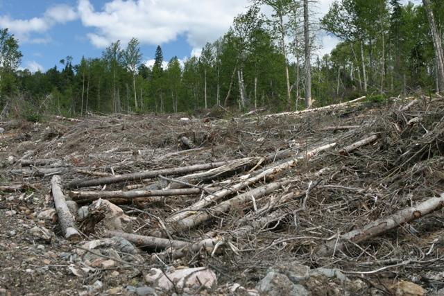 destruction of the rainforest essay